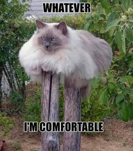 whatever i'm comfortable